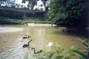 JurongBirdPark_Singapore